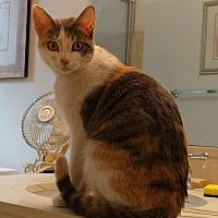 Adopt A Pet :: Jenni - Scottsdale, AZ