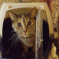 Adopt A Pet :: Ana - Columbia, MD