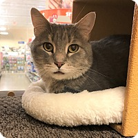 Adopt A Pet :: Tinsel - Barrington Hills, IL