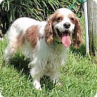 Adopt A Pet :: Bonnie - Sugarland, TX