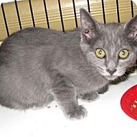 Adopt A Pet :: Kiwi - Dallas, TX