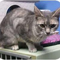 Adopt A Pet :: Zoey - Anchorage, AK