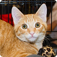 Adopt A Pet :: Rex - Irvine, CA