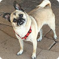 Adopt A Pet :: Baby - Huntingdon Valley, PA