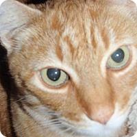 Adopt A Pet :: Cyrus - Sacramento, CA