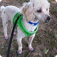 Adopt A Pet :: Tinker - Hazard, KY