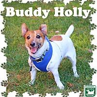 Adopt A Pet :: Buddy Holly - Fallston, MD