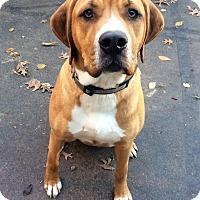 Adopt A Pet :: Fredrick in CT - Manchester, CT