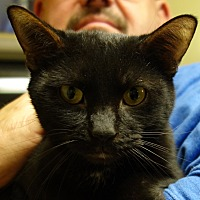 Adopt A Pet :: Domino - Greenfield, IN