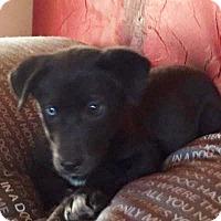 Adopt A Pet :: Cami - Memphis, TN