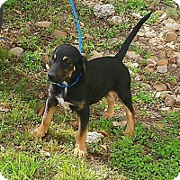 Adopt A Pet :: Jagger - East Hartford, CT