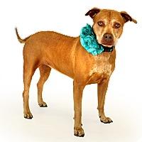 Catahoula Leopard Dog Mix Dog for adoption in St. Cloud, Florida - Leyla