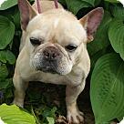 Adopt A Pet :: Margo-ADOPTION PENDING