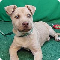 Adopt A Pet :: Bria - San Diego, CA