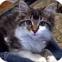 Adopt A Pet :: Gracie Belle - Easley, SC