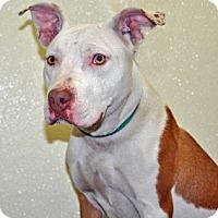 Adopt A Pet :: Coconut - Port Washington, NY