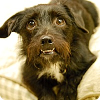 Adopt A Pet :: Jiggy - Sugar Land, TX
