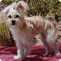 Adopt A Pet :: Savi - Gilbert, AZ