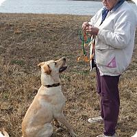 Adopt A Pet :: Luke - Charleston, AR