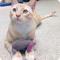 Adopt A Pet :: Mr. Porch - Newport Beach, CA