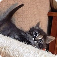 Adopt A Pet :: Giada - St. Louis, MO