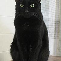 Adopt A Pet :: Skipper - Richand, NY