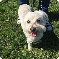 Adopt A Pet :: Q-Tip - Los Angeles, CA