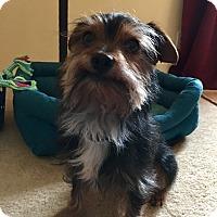 Adopt A Pet :: Riley - Clarksville, TN
