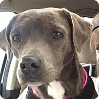 Adopt A Pet :: Trixie - Morganville, NJ