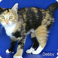 Adopt A Pet :: Debby - Carencro, LA