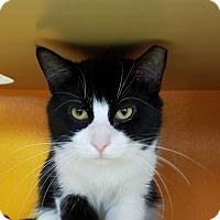 Adopt A Pet :: Guiness - Elyria, OH