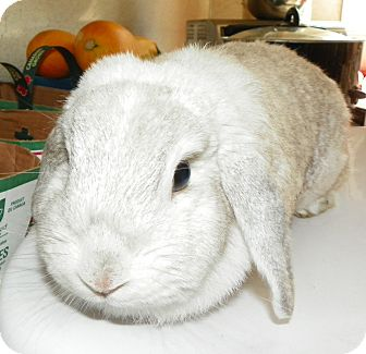 Lop-Eared Mix for adoption in North Gower, Ontario - Aveya