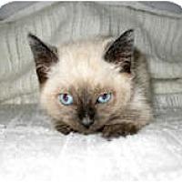 Adopt A Pet :: Tamara - Shelton, WA