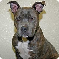 Adopt A Pet :: Burl - Port Washington, NY