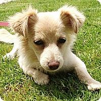 Adopt A Pet :: Roxie - Los Angeles, CA