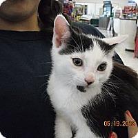 Adopt A Pet :: June - Riverside, RI