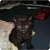 Adopt A Pet :: Ashley - Morris, PA