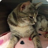 Adopt A Pet :: Maggie - Muncie, IN
