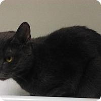Adopt A Pet :: Jillian - Plainville, MA