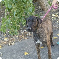 Adopt A Pet :: Lucy - Meridian, ID