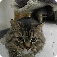 Adopt A Pet :: Prescott - Milwaukee, WI
