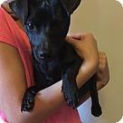 Adopt A Pet :: Pup Digger