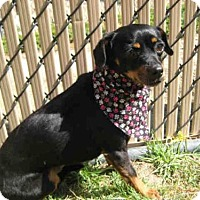Adopt A Pet :: LAYLA - Norco, CA
