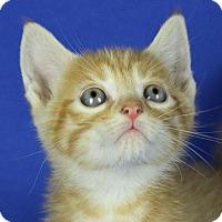 Adopt A Pet :: Sputnick - Winston-Salem, NC