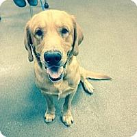 Adopt A Pet :: Ray - Cumming, GA