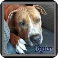Adopt A Pet :: Ryder - Spring, TX