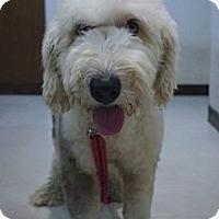 Adopt A Pet :: Mia - Temple City, CA
