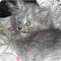 Adopt A Pet :: Winona - Riverside, RI