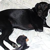 Adopt A Pet :: Sully - Ogden, UT