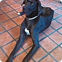 Adopt A Pet :: Delylah - Silsbee, TX